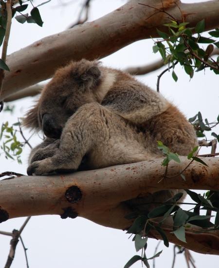 ... sleep... zzz ....