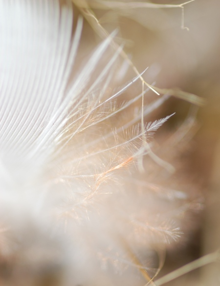 Gold-sprinkled feather